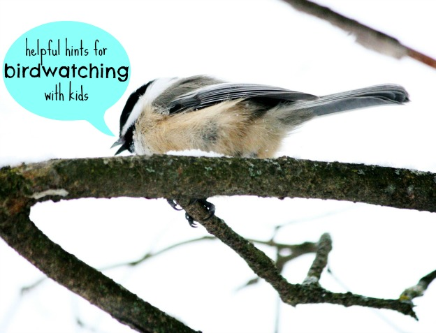 Hints for birdwatching with kids