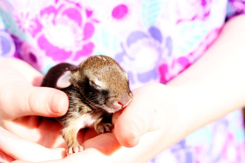 Baby bunny 2