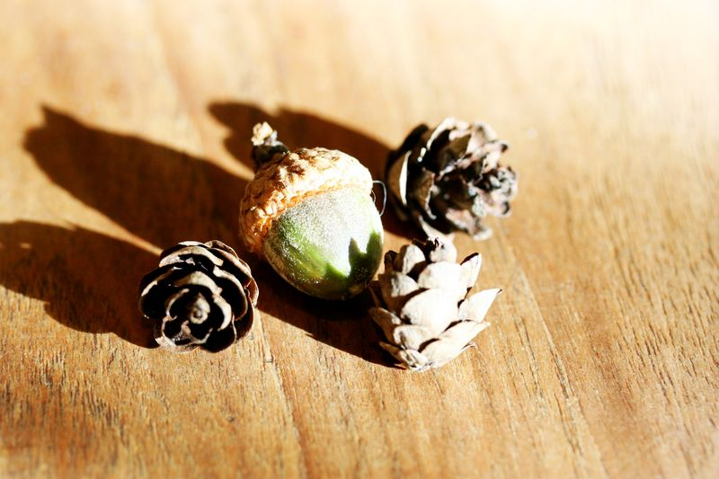 Acorn and pinecones