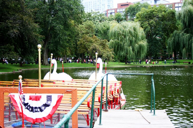 Boston public garden 2
