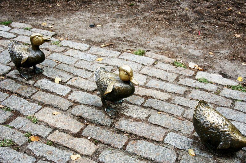 Boston public garden 1