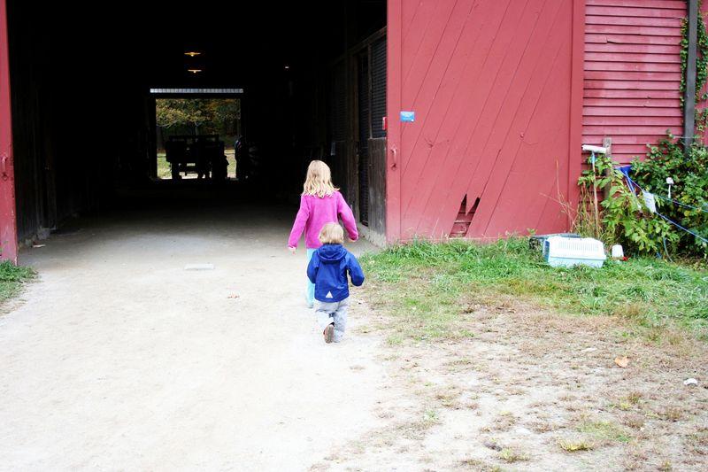 Drumlin farm 4