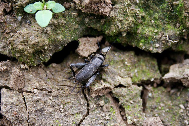 Drumlin farm insect